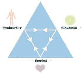 az egészség háromszöge